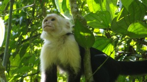 In Manuel Antonio national park
